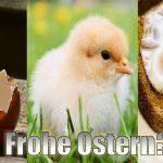 Frohe Ostern - auch für die Tiere?