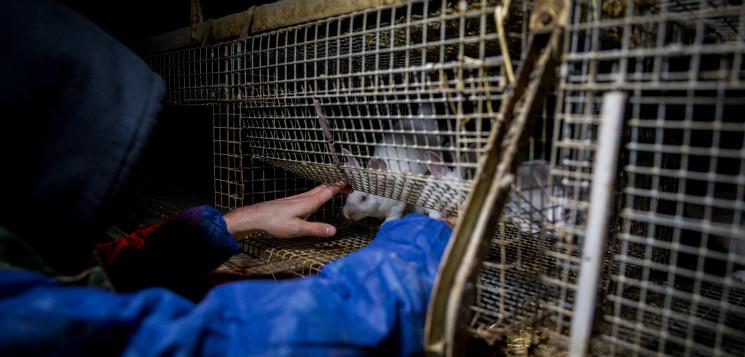 tierretter.de – Tierbefreiung