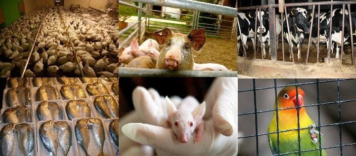 Dritte der Forderungen: Tiere im Mittelpunkt