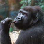 Udo Pollmer – Total Banane: Menschenrechte für Menschenaffen