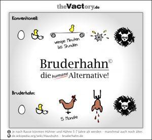 Initiative Bruderhahn – die humane Alternative?