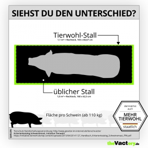 Tierwohllabel – Stallfläche für Mastschweine