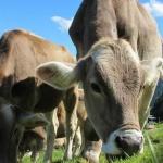 Alles gut bei Biofleisch?