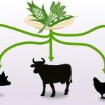 Veredelungsverlust Tierprodukte