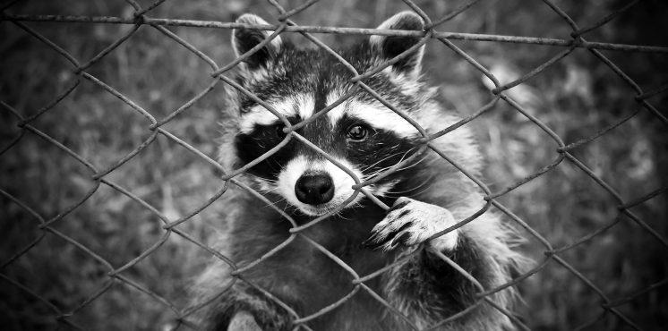 """Adventskalender """"Don't go Pollmer!"""" Tür 3: """"Endlösung: Alle Nutztiere müssen abgeschafft werden, weil sie leiden"""""""